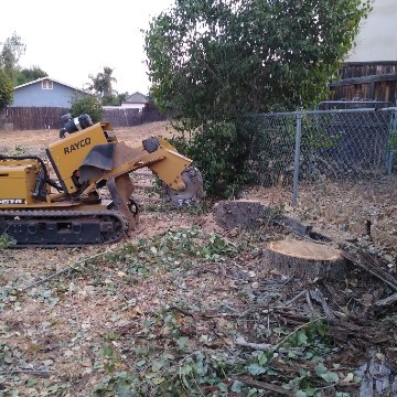 American Tree Company Apple Valley Ca Tree Stump Removal Image Before Stump Removal