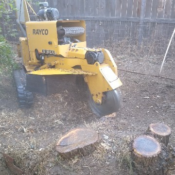 American Tree Company Apple Valley Ca Multiple Tree Stump Removal Before Image