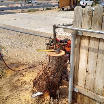 American Tree Company Apple Valley Ca Problem Stump Removal Before Image With Chain Link Fence In Tree Trunk