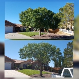 Tree Trimming Before & After Image