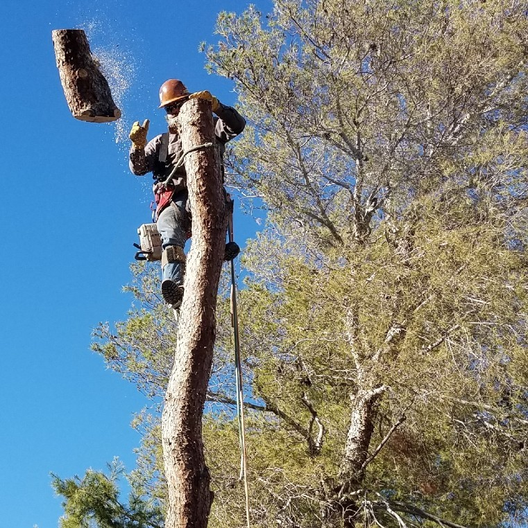 Tree Getting Removed, Tree Removal is One of the Tree Services we offer
